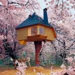 満開の桜と共に。空中茶室「Fujimori Tea (Tree) House」