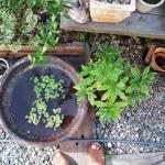 第5回:アパートから庭のある平屋への引越し 葉山暮らし