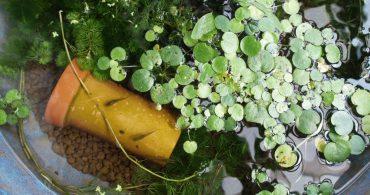 第3回:週末の過ごし方(1)植物のある生活との出会い|葉山暮らし