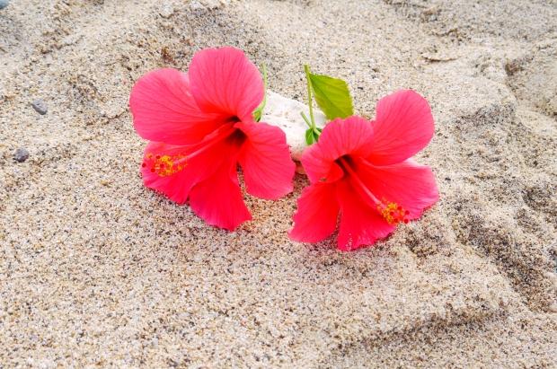 白砂のビーチと寄り添うハイビスカス。いつでも花が咲き乱れている場所です。