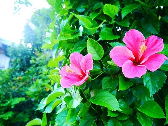 華やかな気分になりたくなったら、道端に咲いた花を髪に挿したり。