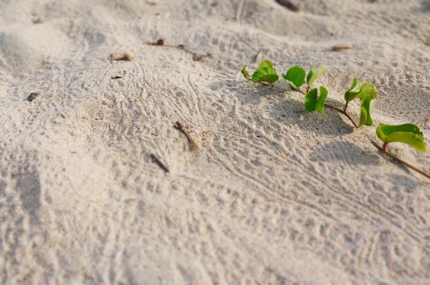 仕事がないのは人が少ないからという理由も。ビーチはいつも人の足跡よりヤドカリの足跡が多いです。