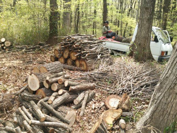 玉切り後に、枝や丸太を分類。