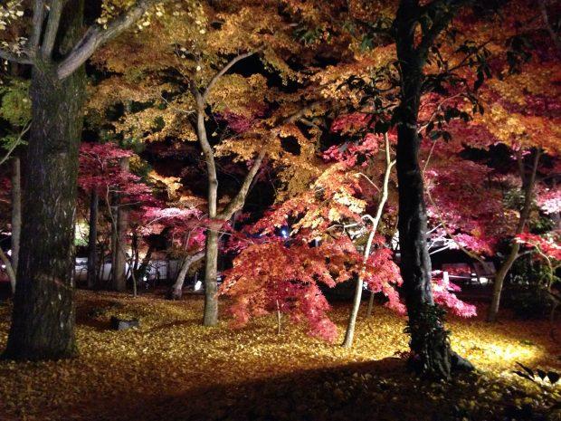 紅葉の名所、京都永観堂の様子。日本の秋を堪能しました。