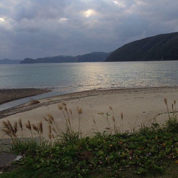 いつも眺めている諸鈍長浜にもススキがたなびきます。
