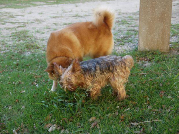 道端で出会うキスをする犬。お邪魔虫かもしれないけど撫でさせて!