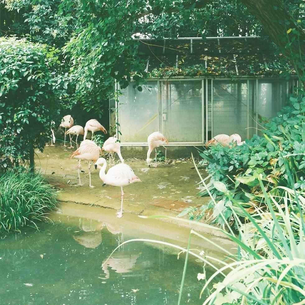 動物園にいるとつい時間を忘れます