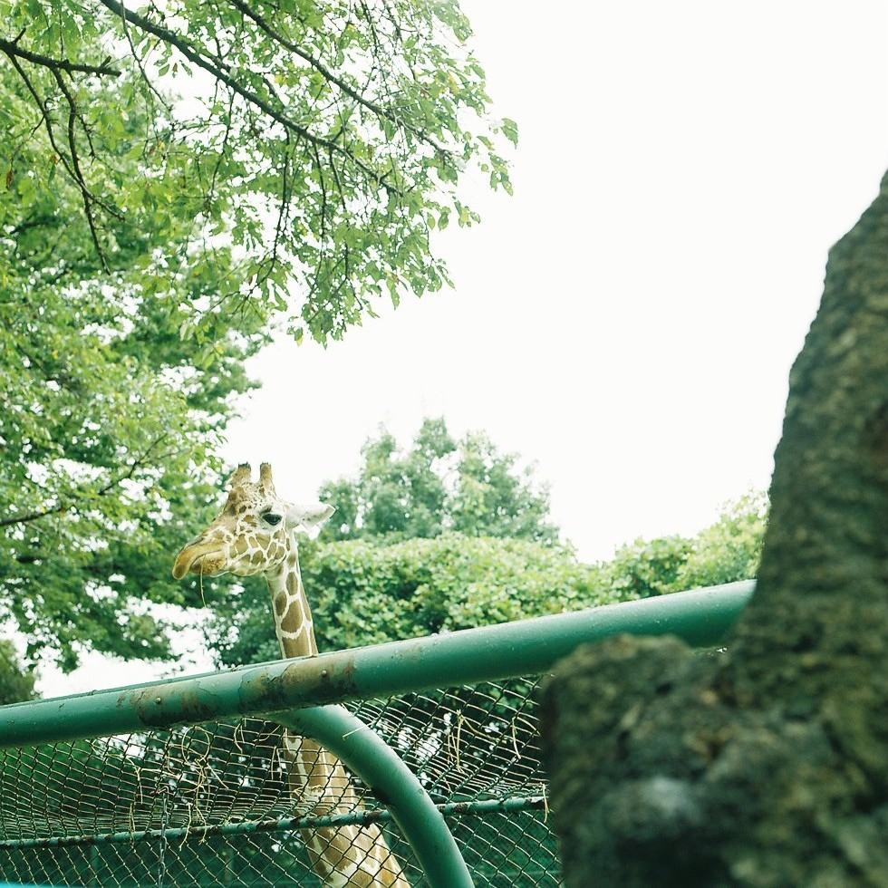 動物園は撮影スポットの宝庫