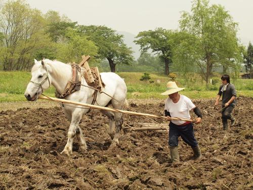 畑では馬耕にも挑戦している。