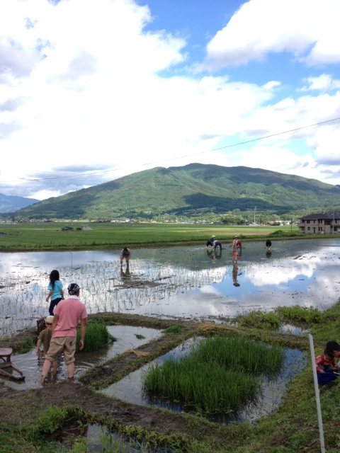 伊勢崎さんは山からの水が流れこむ麓で自然栽培のお米や野菜を栽培している。