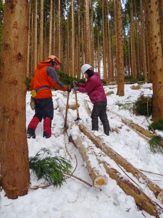 テコの原理を使って、少ない力でも木を動かせる 「トビ」という道具を使って、間伐材を移動。 少しコツはいるが女性でも丸太を動かせた。