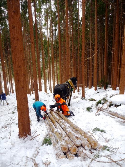 集めた間伐材を、馬搬専用の道具でまとめて搬出。 馬搬の道具は、搬出する材や方法に応じて種類が分かれている。 そういった道具の種類にも先人の経験と知恵を感じる。