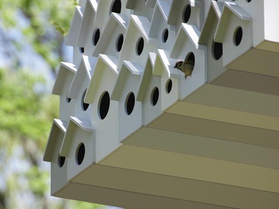 bird-apartment_03