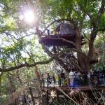 ツリーハウスつくろう(番外編)〜星野リゾート・リゾナーレ熱海 – 森の空中基地 くすくす〜