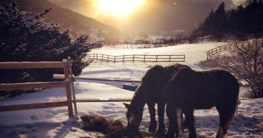 馬と共に循環する暮らしへの挑戦