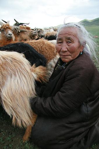 遊牧民の生活。ヤギの乳搾りをする姿。彼女は一家の知恵袋