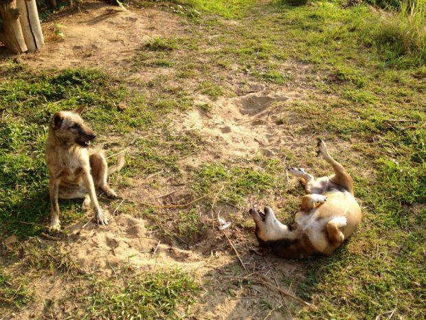 いつも戯れていた犬たち