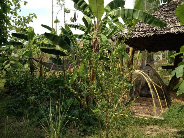 バナナの木が印象的だった農地