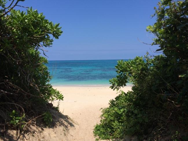 第11回:宮古島で見た、入場料が野菜のフェスティバル|女子的リアル離島暮らし