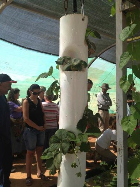 筒状のイチゴ栽培器