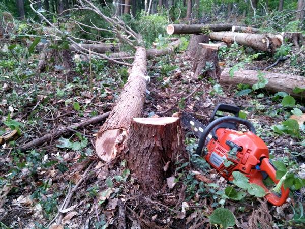 私自身も無事に1本伐倒させて頂きました。が、小径木でも狙った方向に倒すのは難しい....!改めて木こりの方々の技術とご経験からくる智慧や判断力に頭が下がりました。