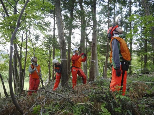「あ!ちょっと木が傾いたよ!」「もうそろそろ倒れそうだよ!」作業をしていない周囲の皆さんも、作業の様子に真剣に見入ってました。