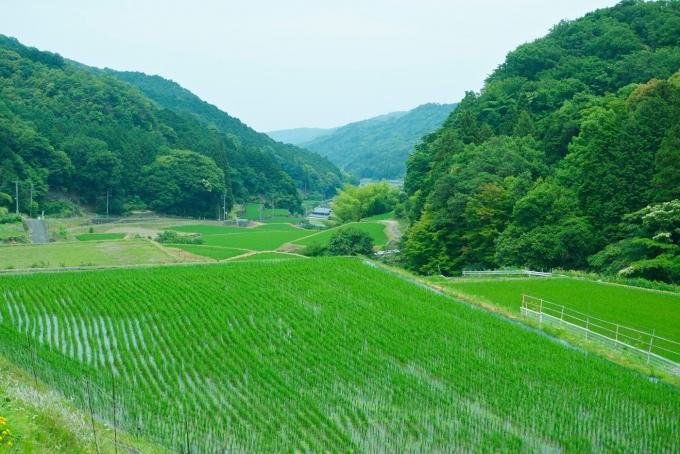 夏の上毛町は、田畑にも山々にも美しい緑が広がります。