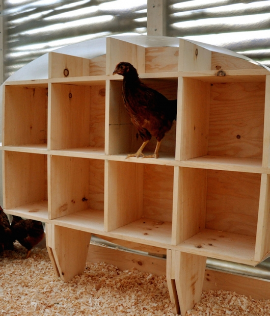 Chicken-Chapel-roosting-house