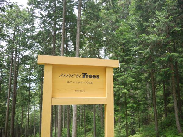 加子母にあるmore treesの森。 樹齢12年生、35年生、80年生の3世代のヒノキが混在する複層林。