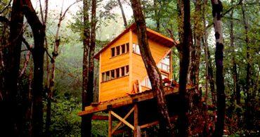 人生を冒険する女性の、セルフビルドツリーハウス「The Wee Treehouse」