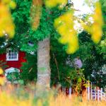 【特集コラム】第1回:本当の豊かさとは何か? 北欧「夏の家」に学ぶ、暮らしのヒント