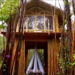 【前編】アラサー女子、ハワイのワケ有り土地に隠れ家コテージを建てる「Tiny House on the Big Island」