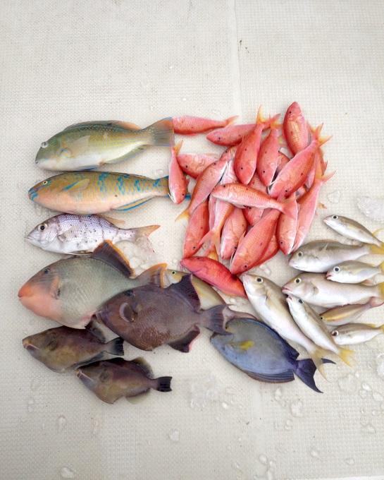 友人が来島した時に釣りをしたときの釣果。二人で40匹近く釣りました。
