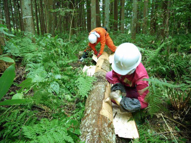 屋根に敷く樹皮を剥くために、竹で作ったヘラを木の皮に差し入れいれるように皮を向いていきます。
