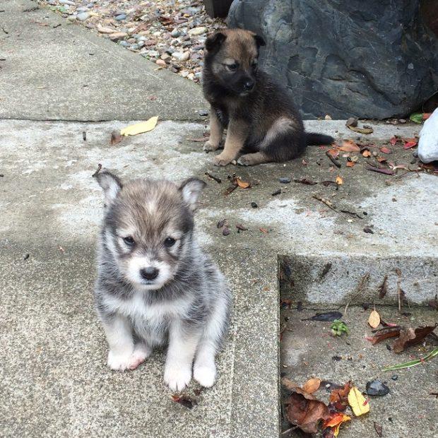 先日、道端で出会った子犬二匹。あまりの可愛さに思わず寄り道。
