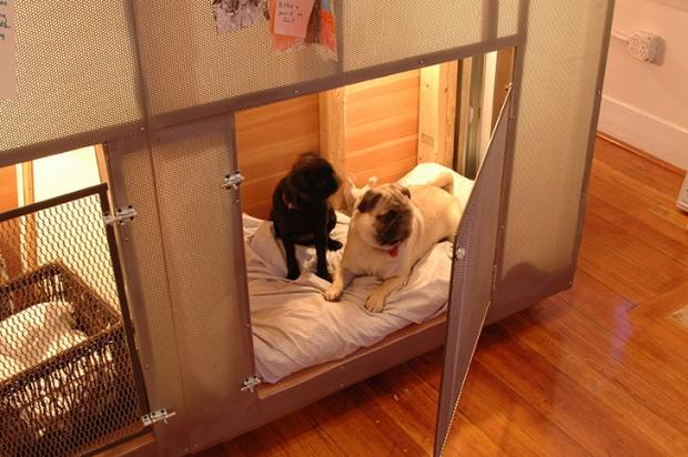 Dan-Hisel-Z-Box-Doggies