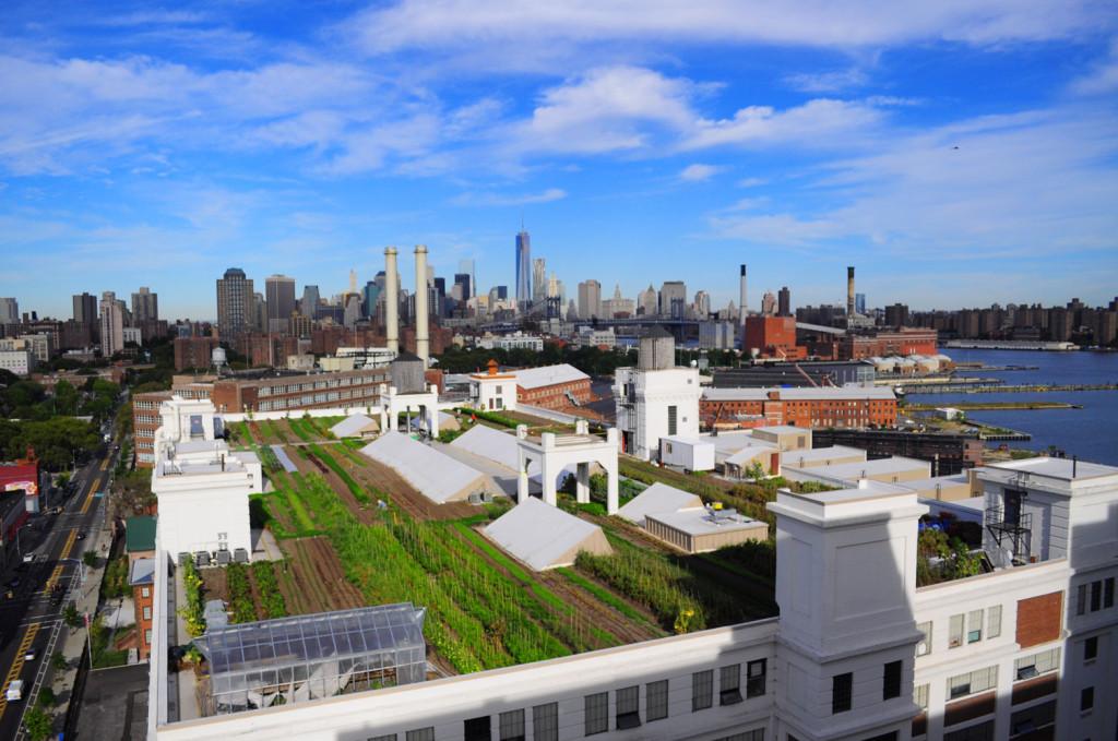 大都会で地産地消!? ビルの屋上でする農業「Brooklyn Grange」