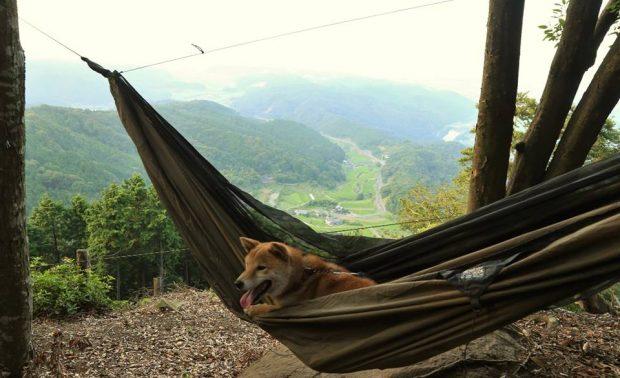 ホテル代わりのハンモックは快適な寝心地。写真は福岡県上毛町にて