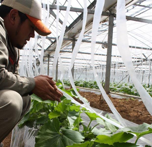 Uターンし、福江島で農業法人ベジテールの代表をつとめる同年代の尾崎さん。他企業とのコラボ商品づくりなど新しいことに積極的に取り組んでいる頼りになる島男子。