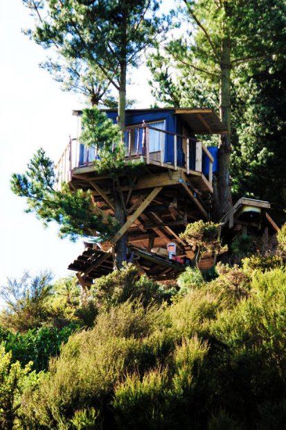 tree-bach-in-NZ-tub03