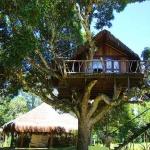 こんなツリーハウスが欲しかったんだ、丸ごと自然と親しむネイチャーリゾート「Art Jungle」