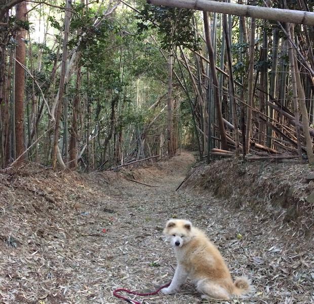 集落にある神社までの小道。きっと長い時間をかけて集落の人たちが作り上げてきたのだと思います。