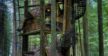 おとぎの国から飛び出したようなツリーハウス