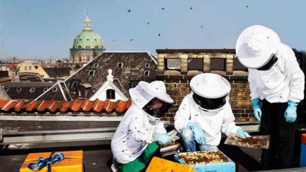 世界を救える?コペンハーゲンのビル屋上で採れる蜂蜜「Bybi」