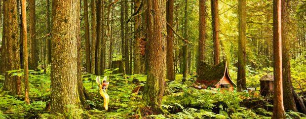 header-slide-forest-web-low2