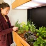 スマホで管理できる室内ガーデンで、毎日サラダ「Grove Ecosystem」