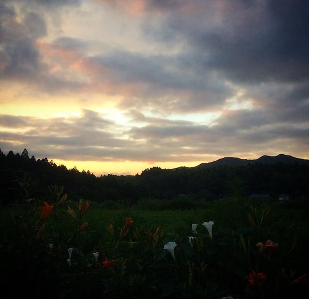 農村の夕暮れ。花の匂いがします。