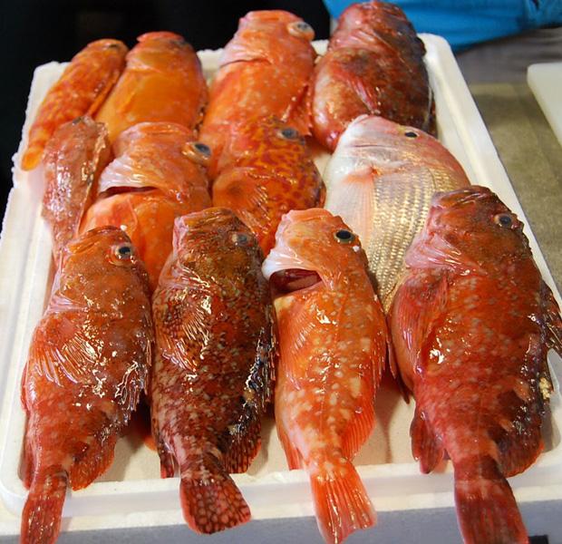 島男子が獲ってきてくれた魚。幸せです。彼は20代前半で自分の漁船をもつ若きエース。五島列島福江島にて。