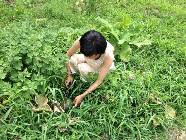 家庭菜園で実った野菜を収穫するサトウさん