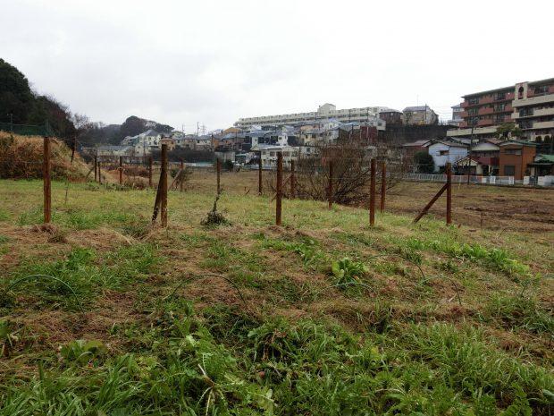 横浜にありながら里山の風景が広がる土地がサトウさんの新生活の場